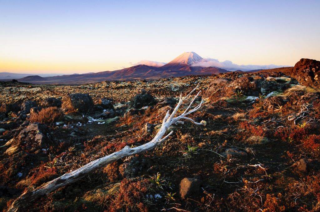 A view of Mt Ngauruhoe touched by the sun in the distance with scrub in the foreground