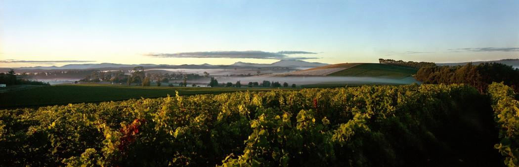 Islands of Wine