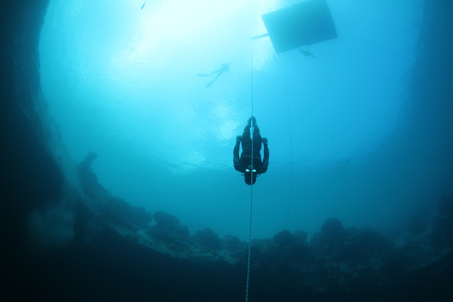 Life Aquatic: <br>Learn to Freedive