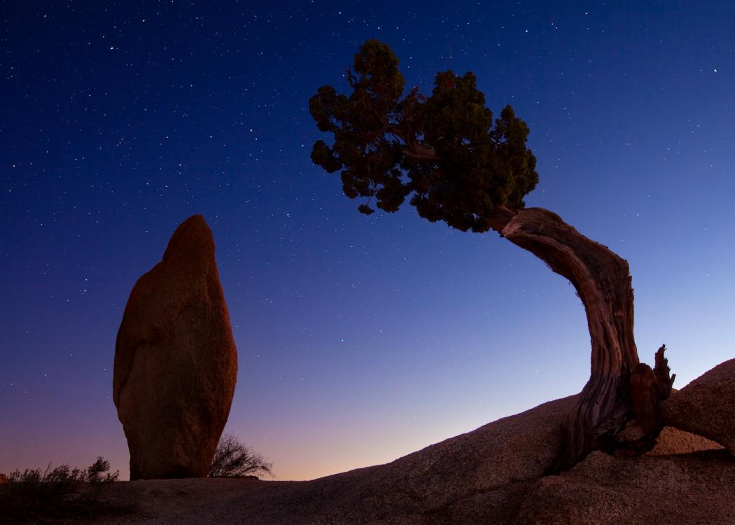 Desert Aesthetic: Finding a Creative Oasis in Joshua Tree, California