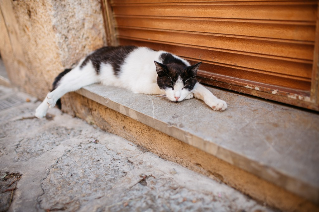 A tabby perfectly encapsulates the relaxed lifestyle of Majorca.