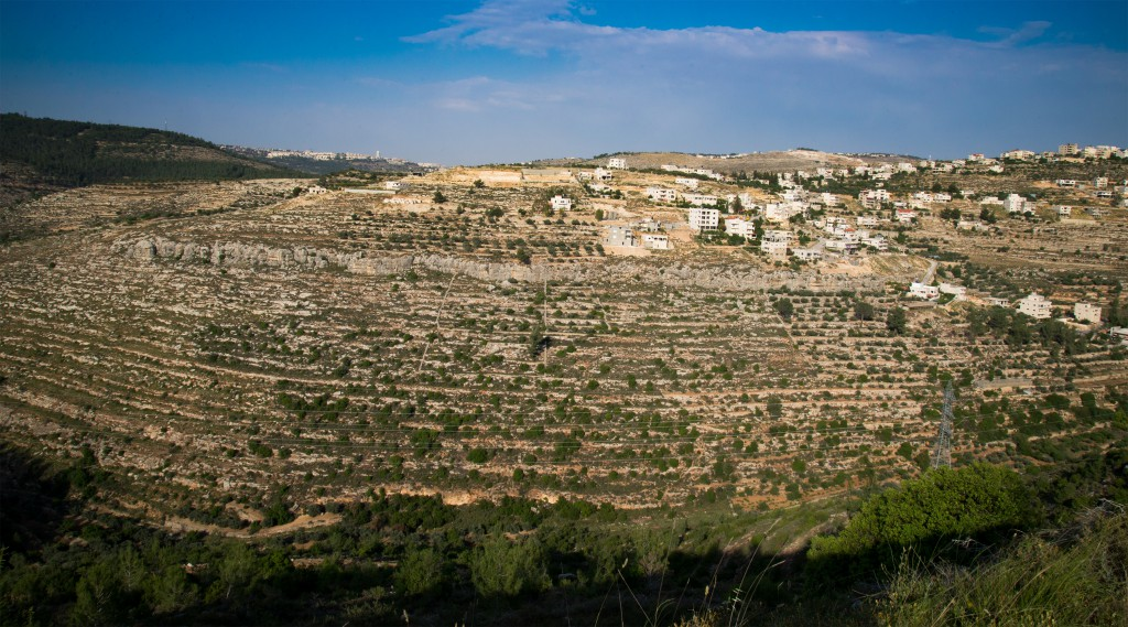 Ancient irrigated terraces carved into a hillside and the white buildings of the Palestinian village of Battir further on