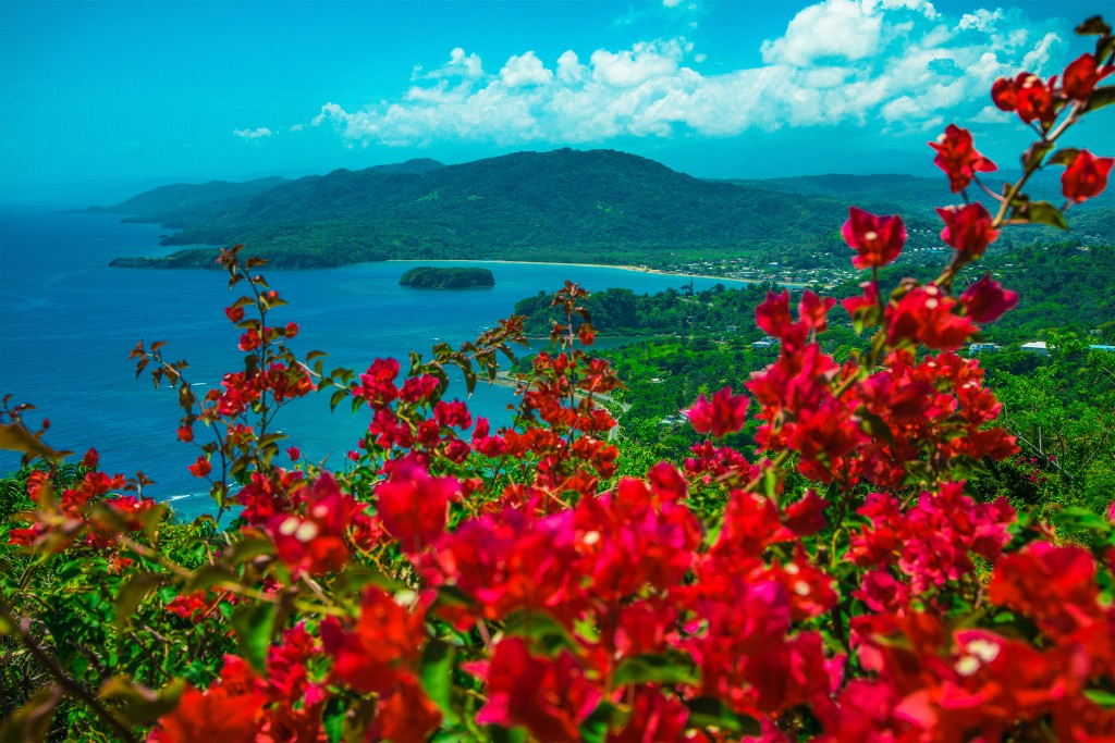 A view out through a red-flower bush to the sea and lush green hills in the distance