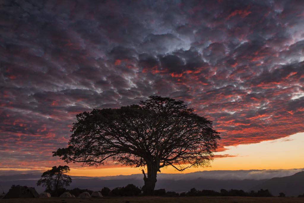 Dusk settles over the Serengeti. Photo by Marco Gaiotti