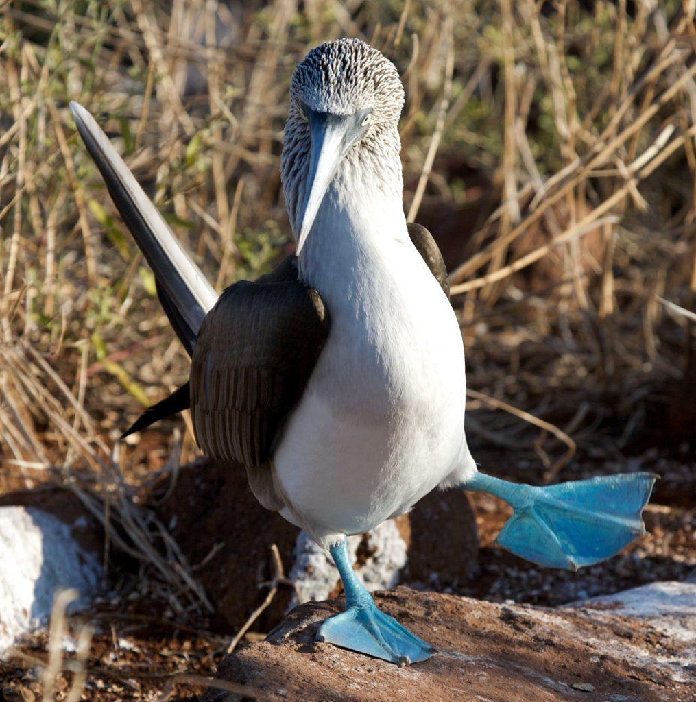 Destinationsmag_Peter_Norvig_Galapagos11 Galápagos Islands, Ecuador
