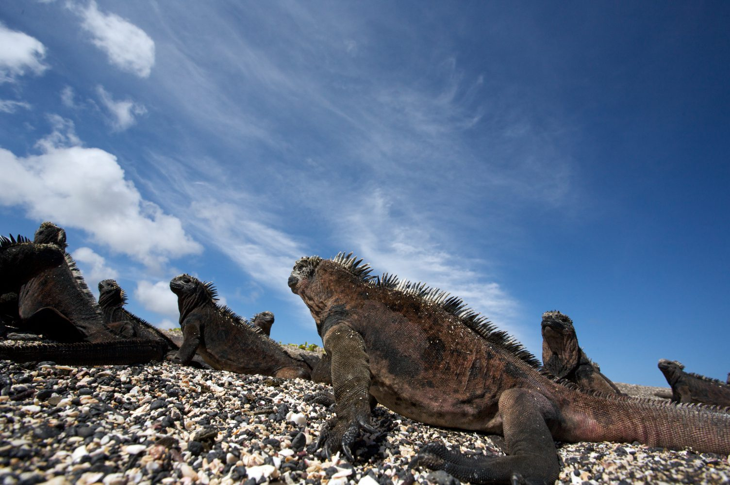 Cruising Galápagos: The Land Before Time