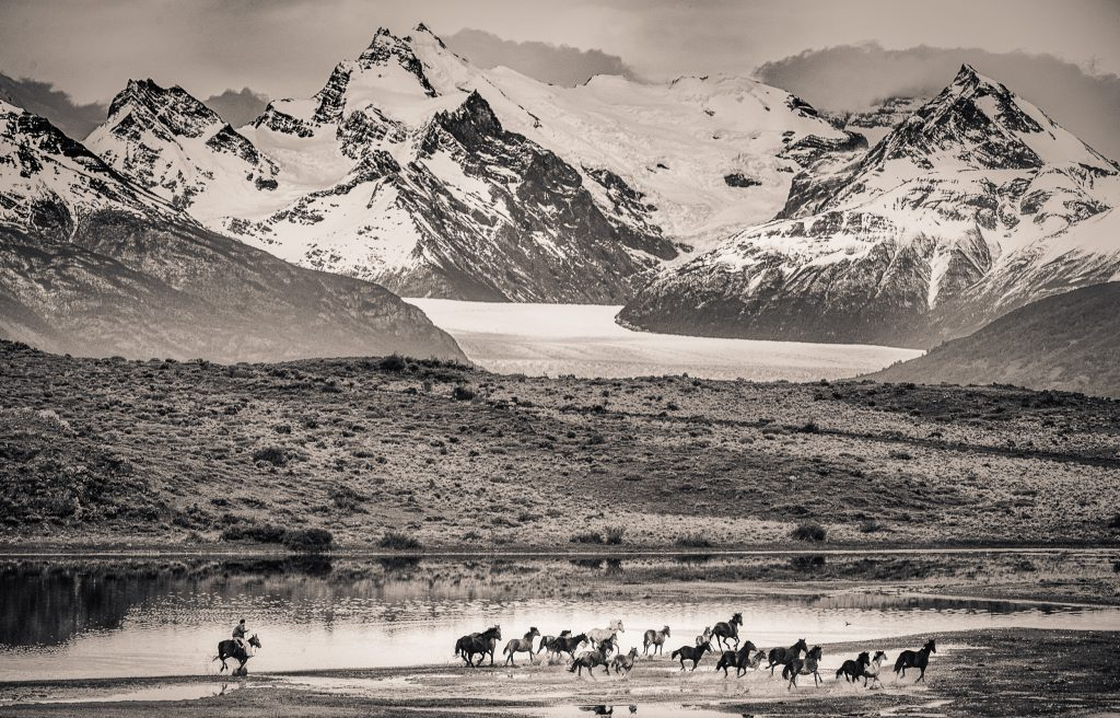 Patagonian gaucho trying to drive a herd of wild horses to the ranch, El Calafate, Santa Cruz province, Argentina.