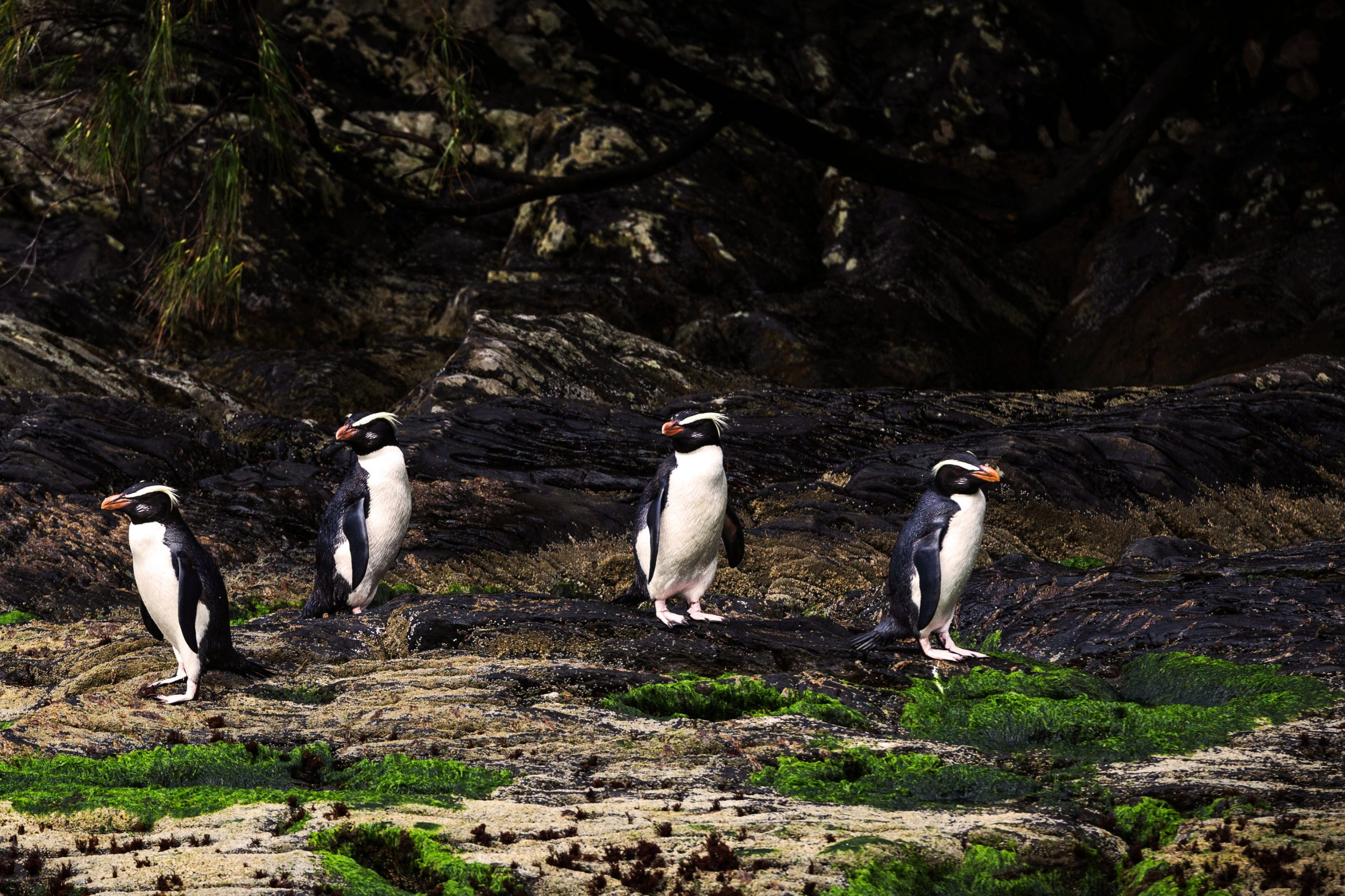 Penguins on Seymour Island