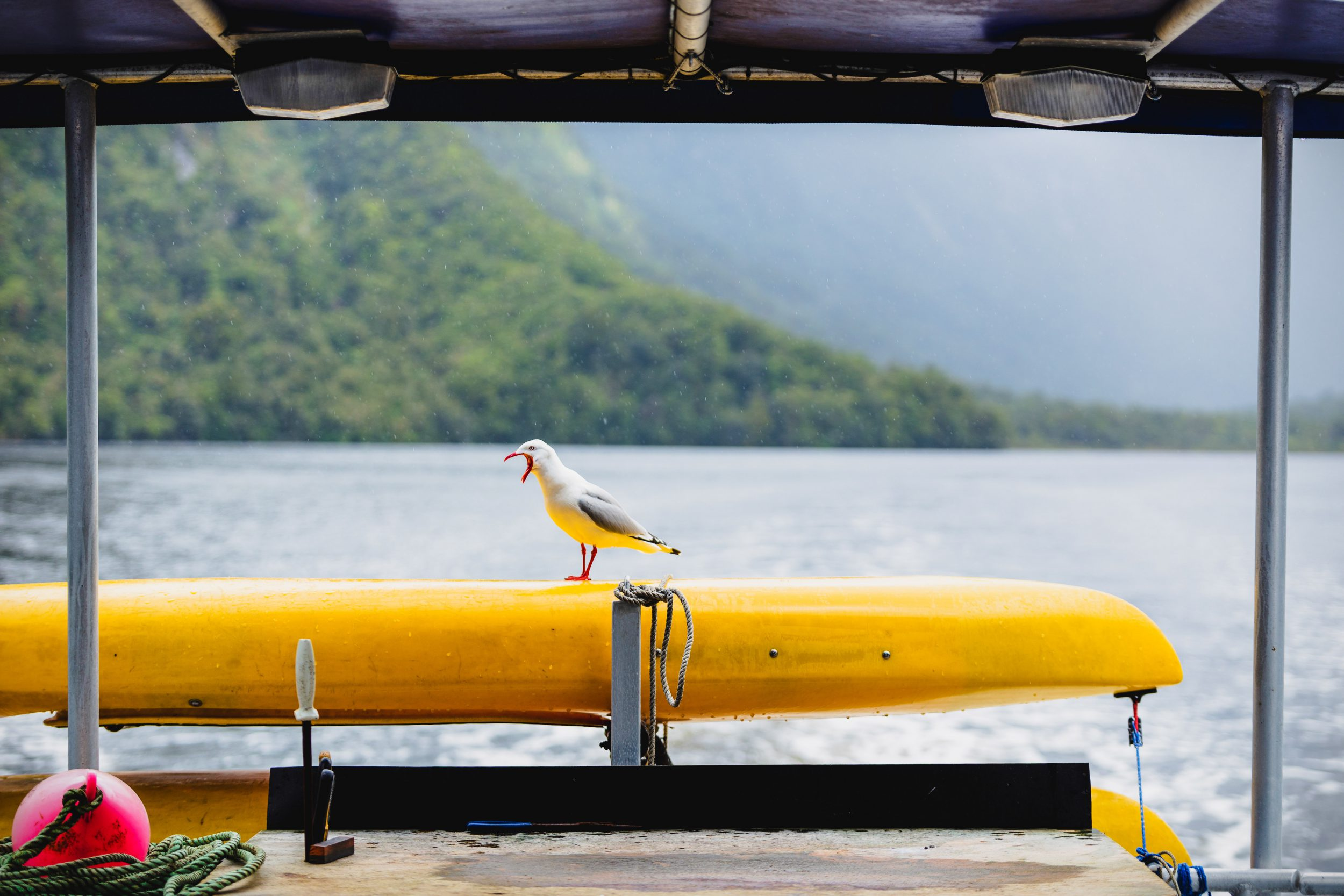 A seagull catches a ride on a cruise through New Zealand's Doubtful Sound