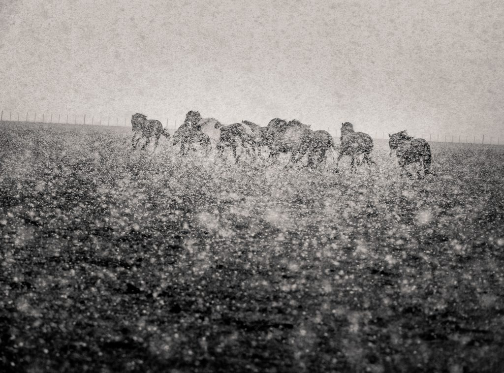The horses search for a shelter to protect them from a strong storm.
