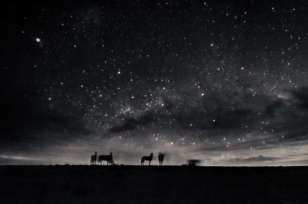 To understand the lives of the horses, it is necessary to follow them for days, even at night.