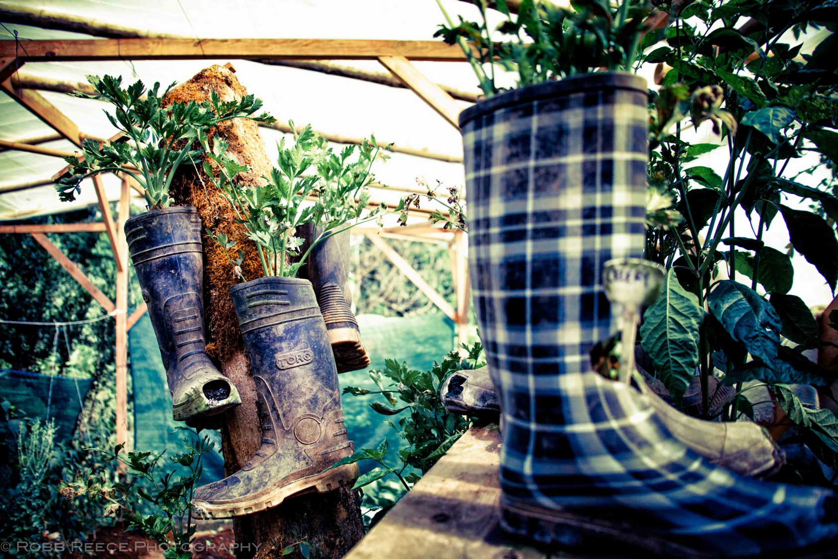 Tree House Community: Used boots used as planters in a nursery
