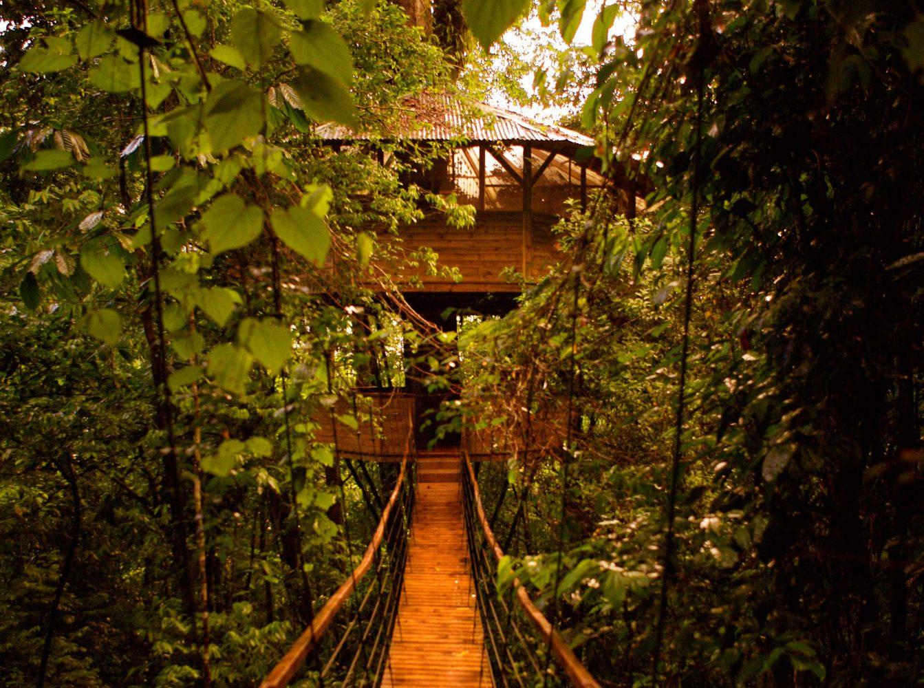 Finca Bellavista: A Tree House Community