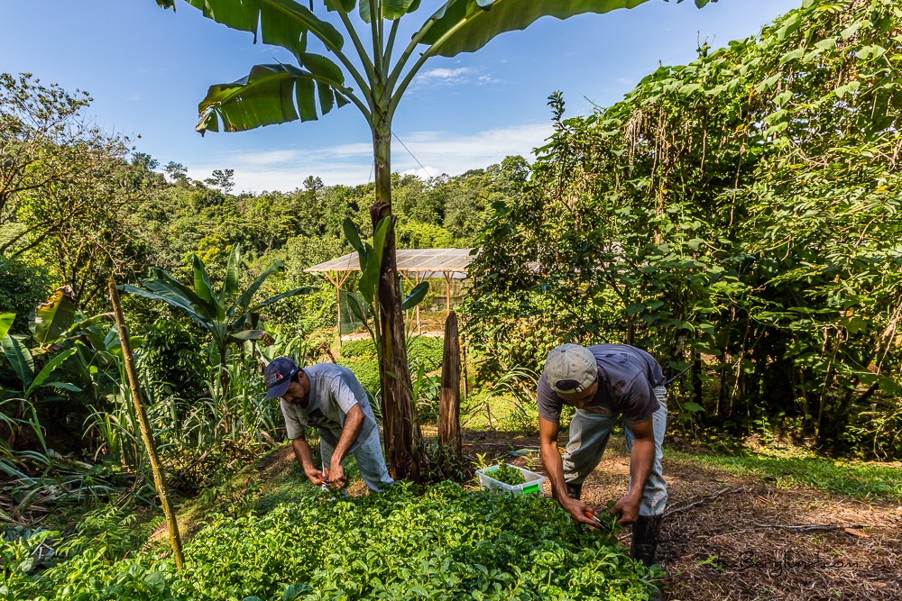 Gardeners at Finca Bellavista, Costa Rica