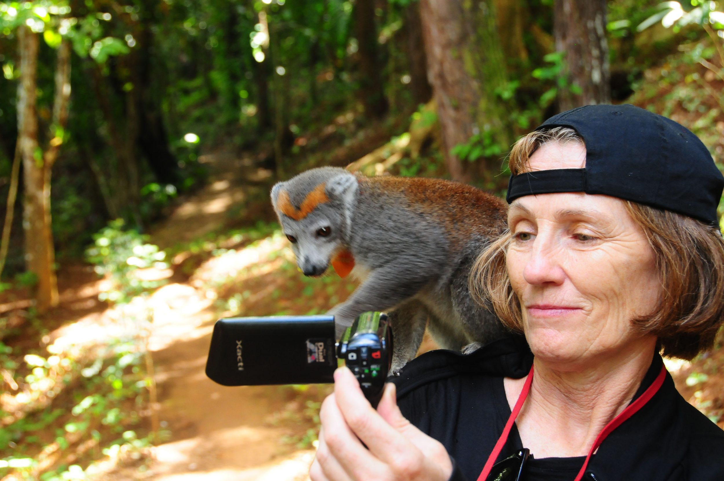 Jo Morgan and a crowned lemur engage in cellphone communications. Madagascar, Africa