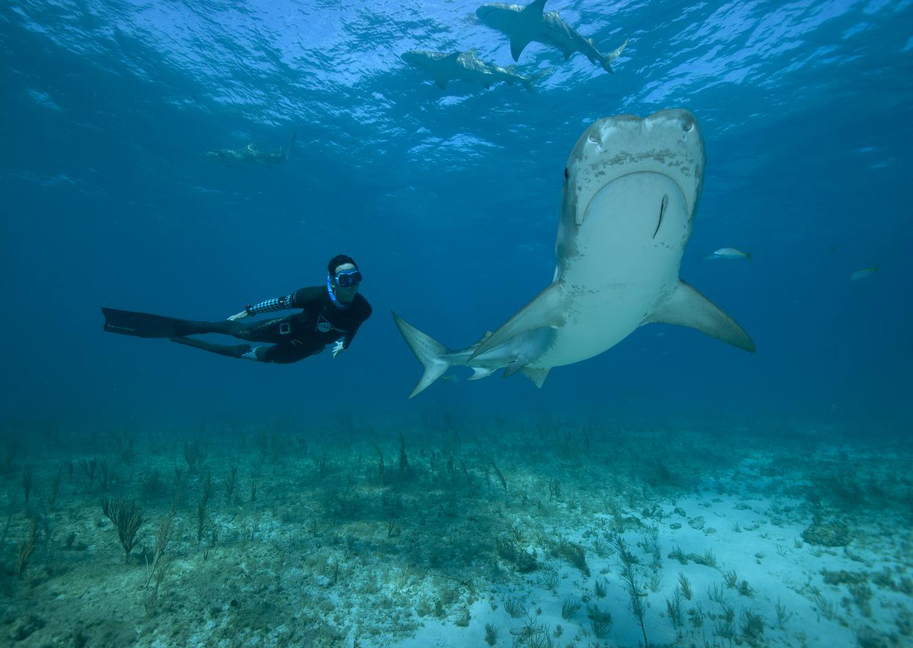 Pierre Frolla: An Invitation to Protect the World under Water