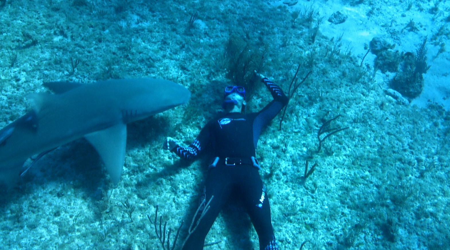 Pierre Frolla swimming close to a shark