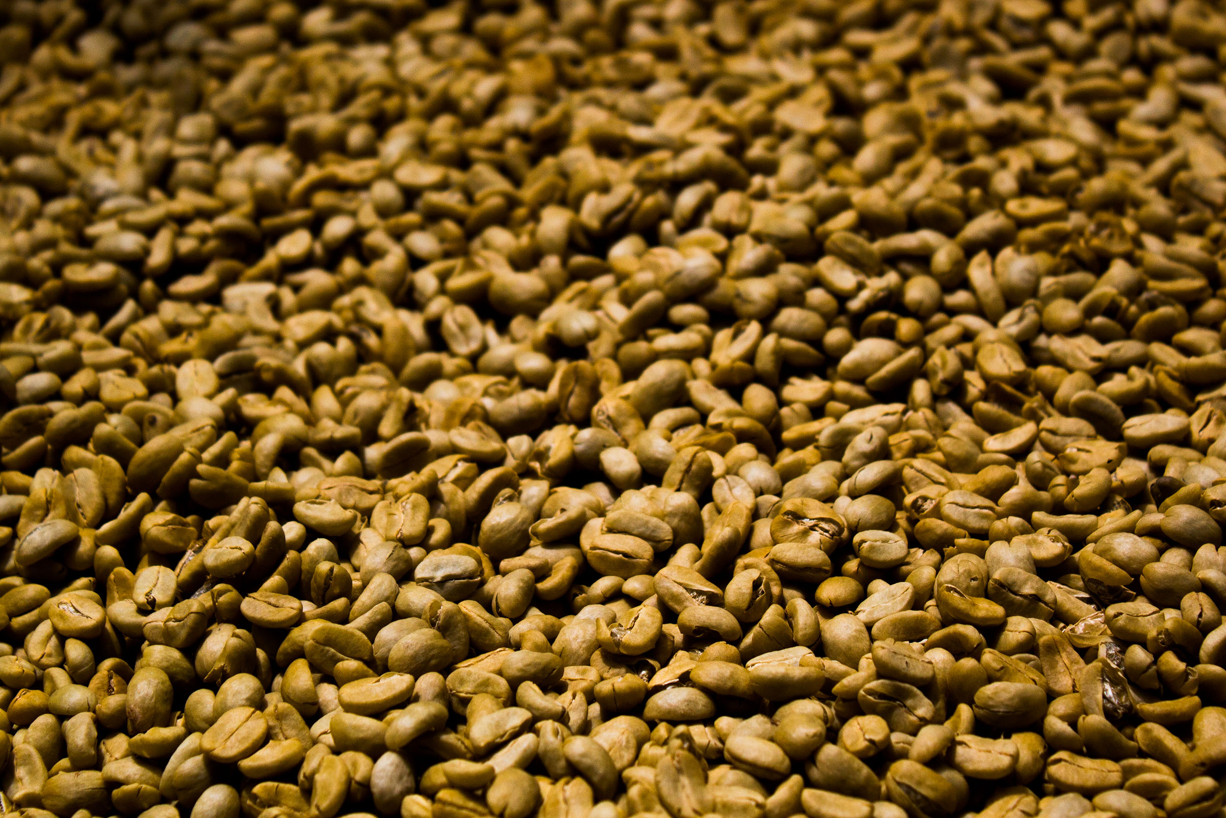 Close up of coffee beans, Bolaven Plateau, Laos