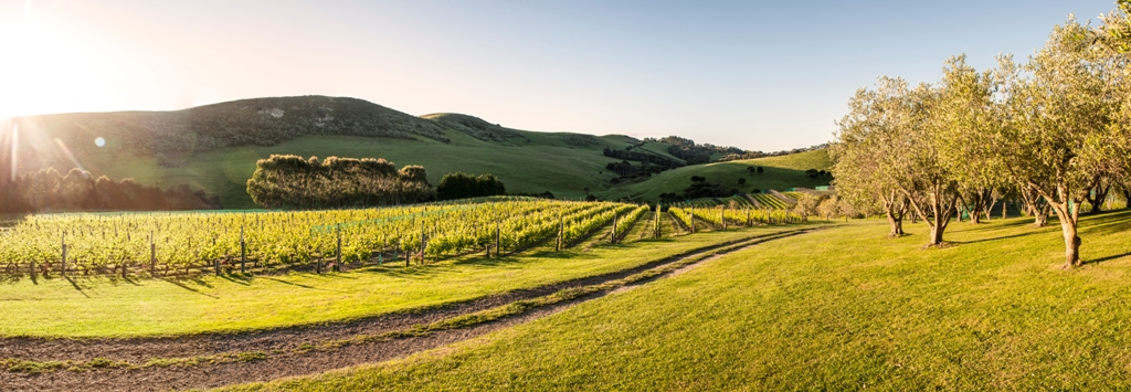 Stoneridge Vineyard, Waiheke Island