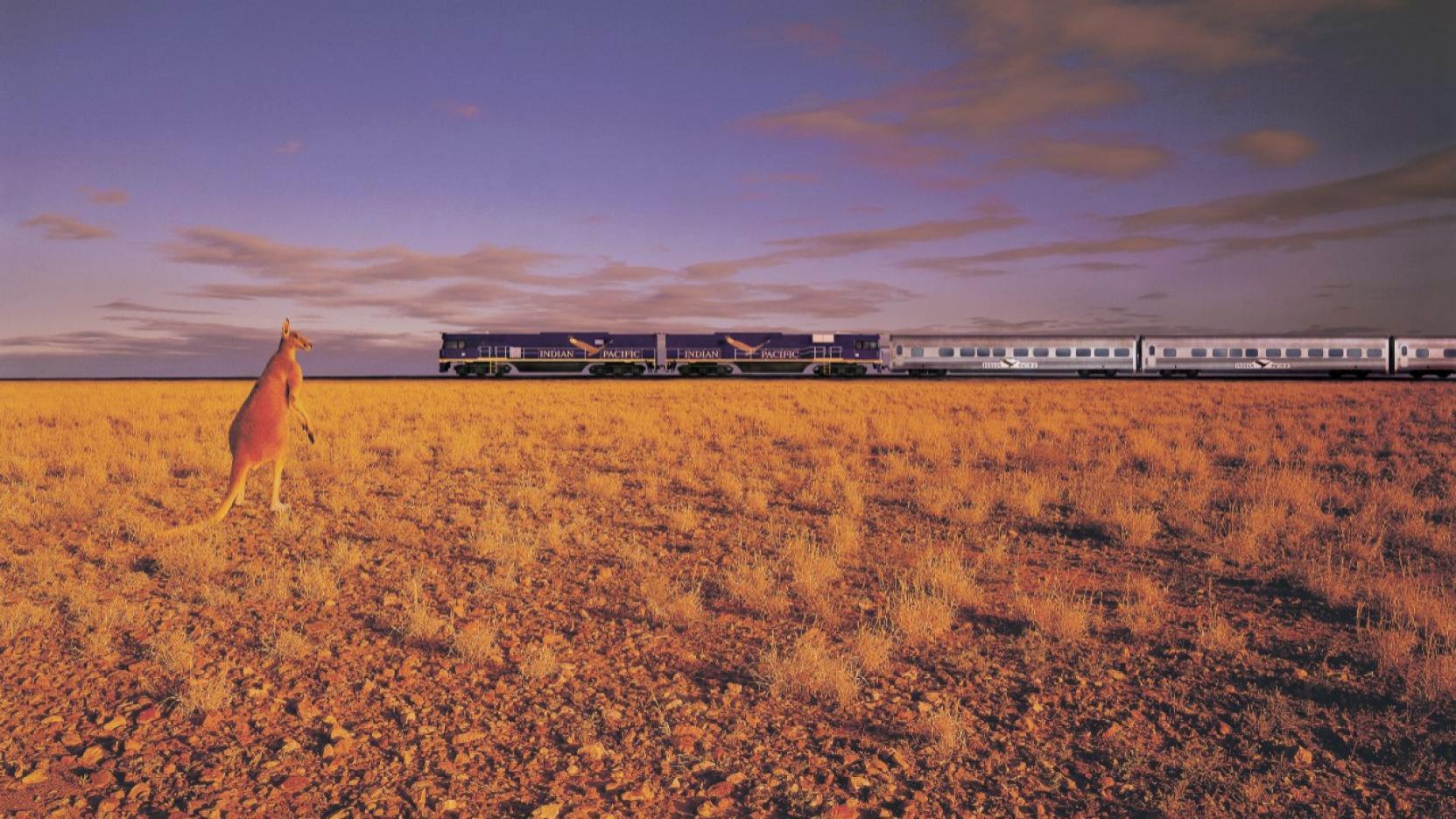 Kangaroo watching a train go past in the distance, Australia