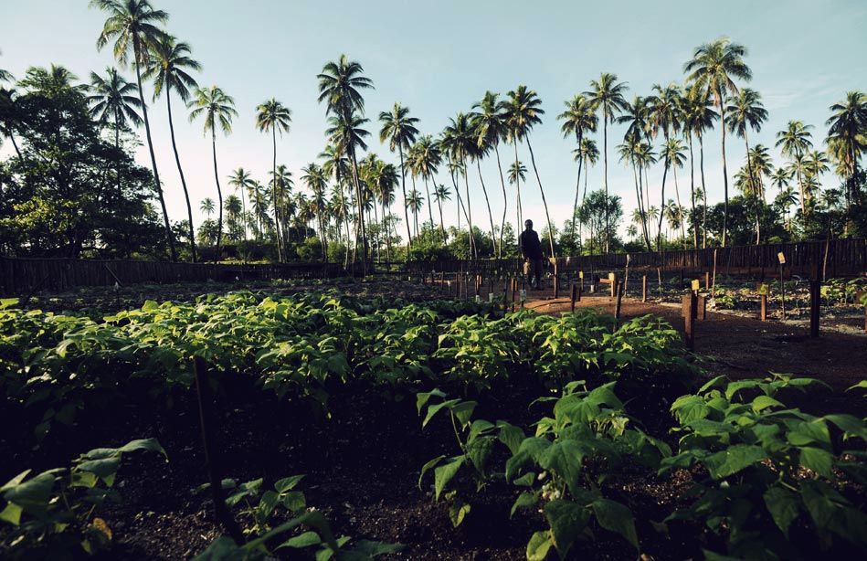 The island's vegetable garden.