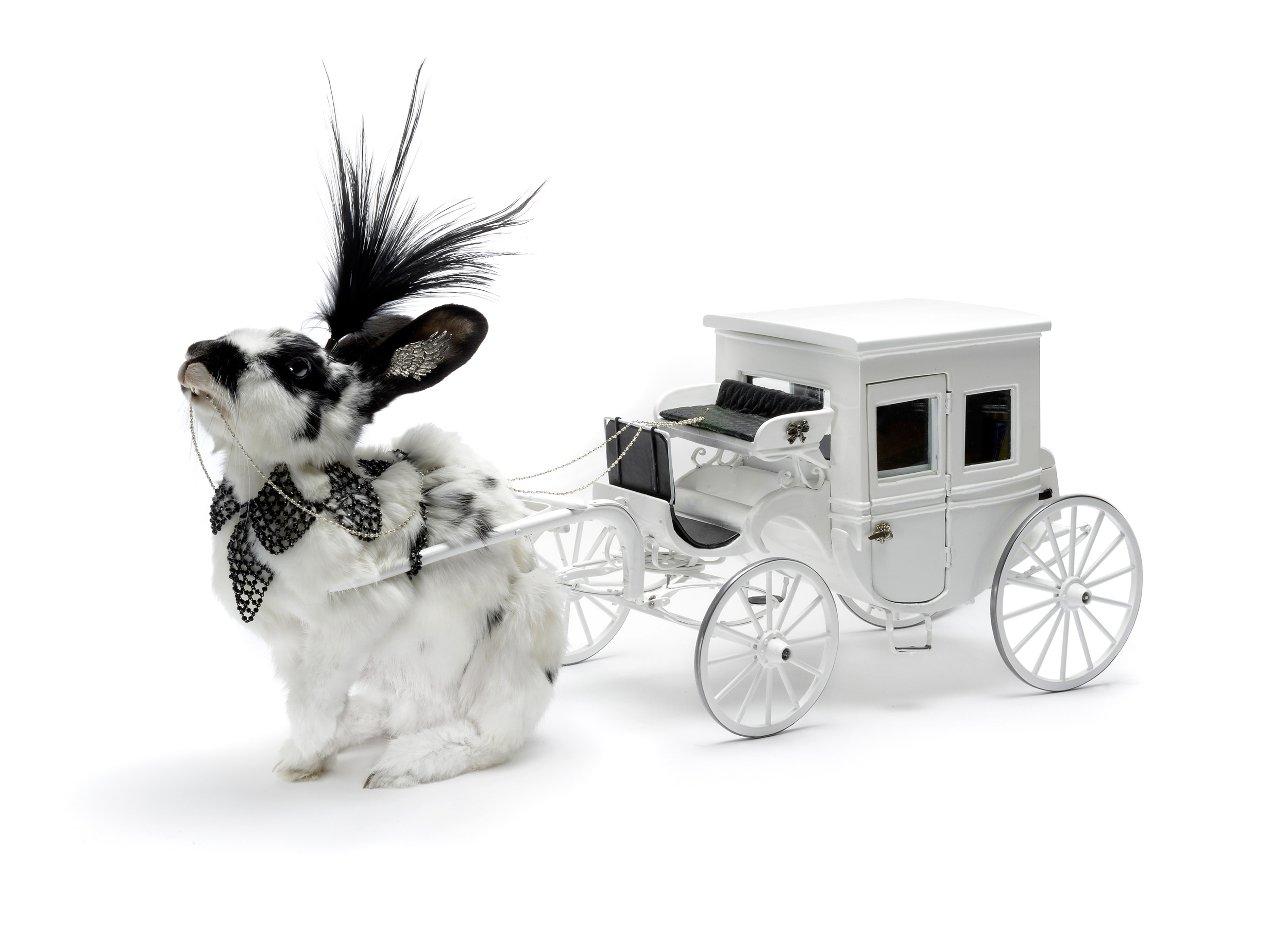 A taxidermied rabbit pulling a carriage