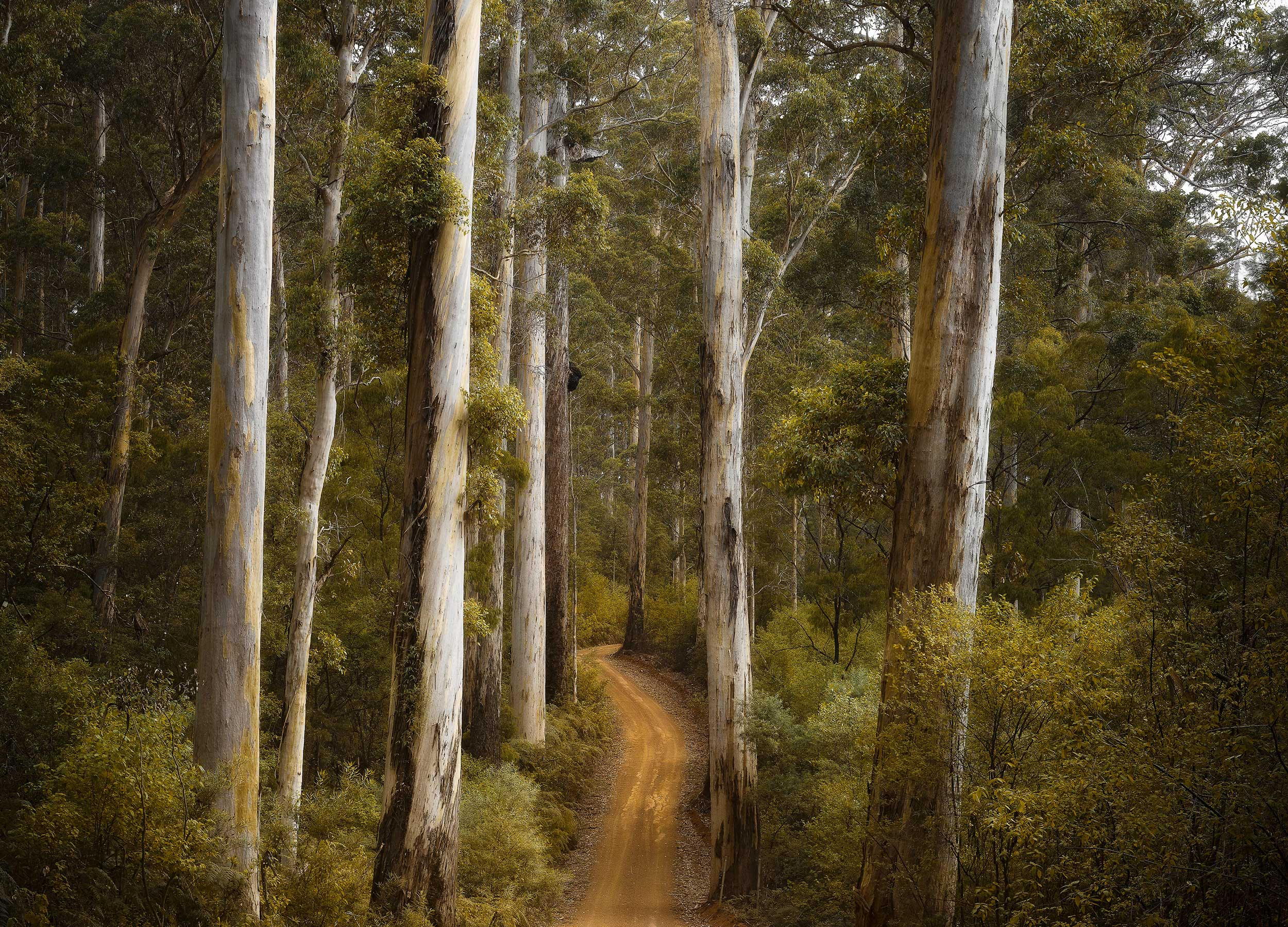 A track among the trees at Meelup beach in Geographe Bay