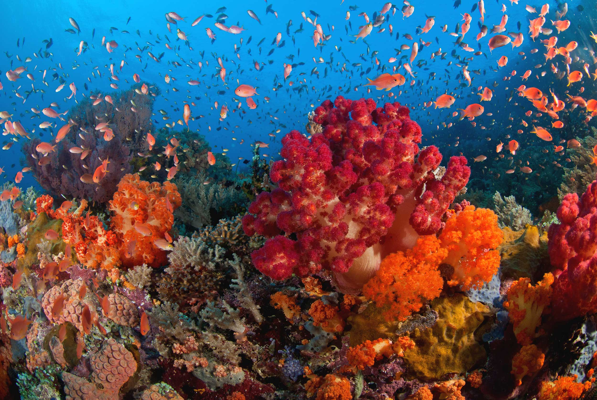 The vibrant marine life of Raja Ampat creates a colourful underwater landscape.