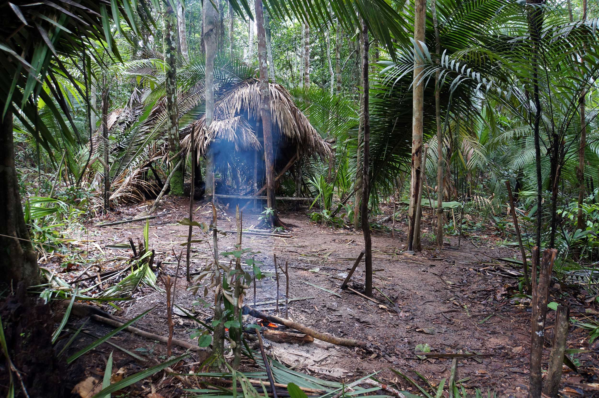 A small fern-thatched hut in a jungle clearing in the Amazon