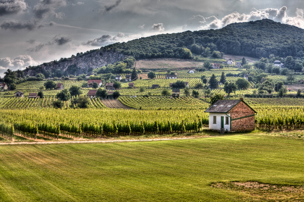 Vineyards stretching to the foothills in Villány, Hungary