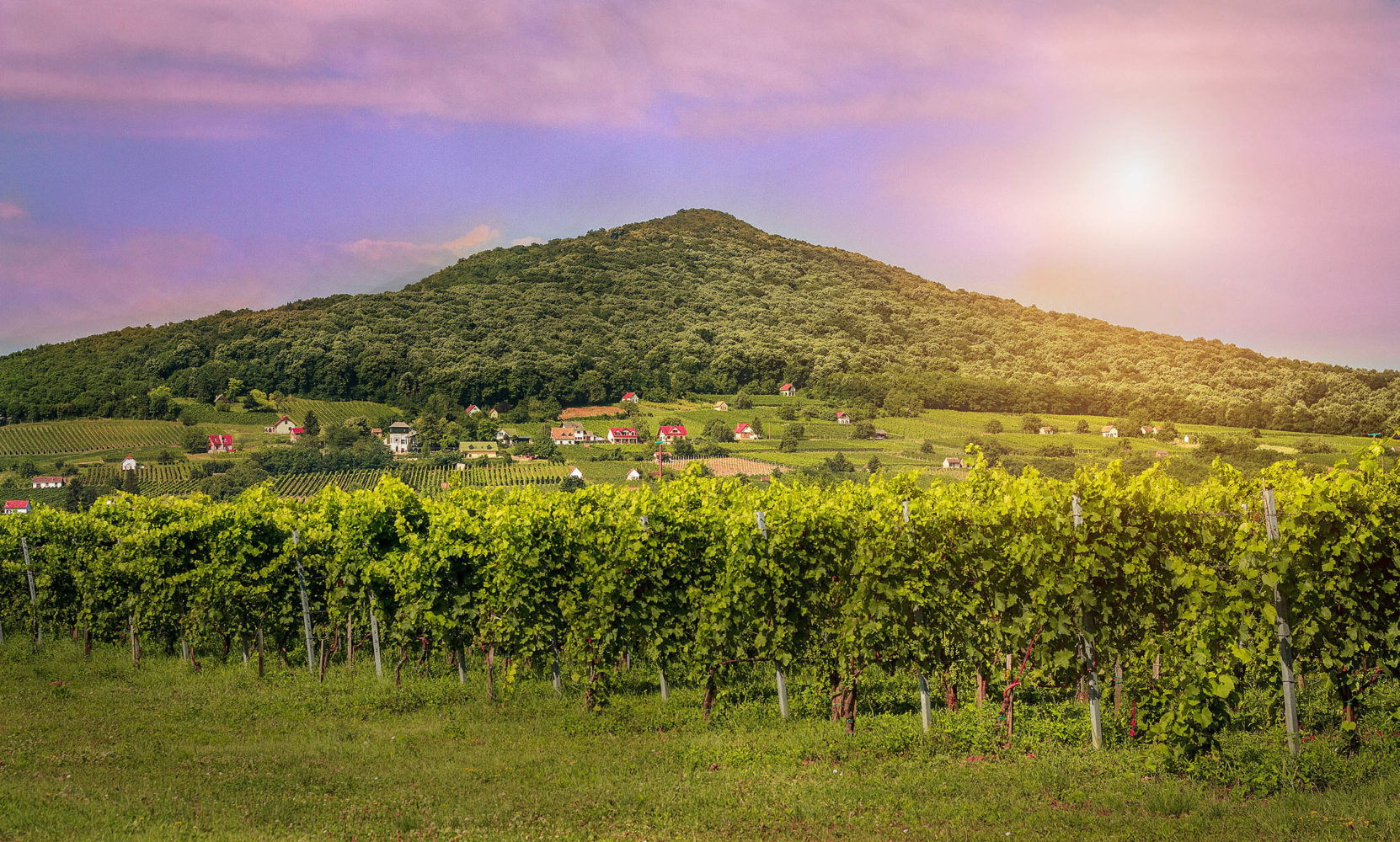 Out of the Shadows: Rediscovering Hungarian Wines
