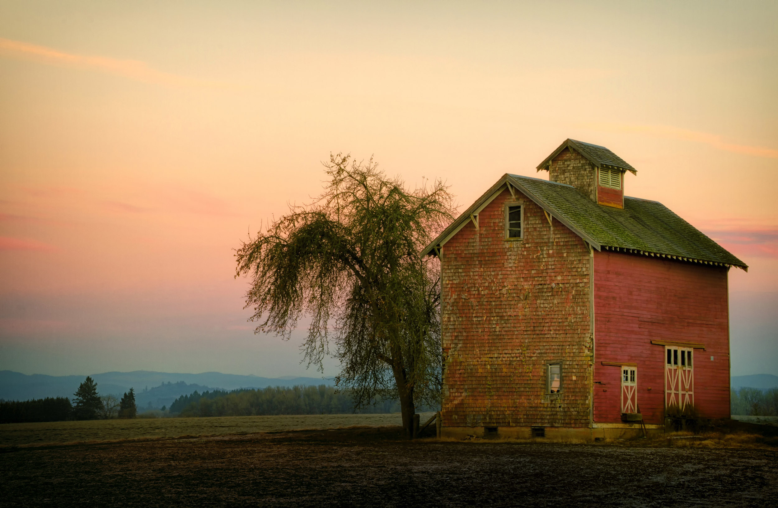 A solitary tall, brick barn by a tall tree in evening light, Oregon