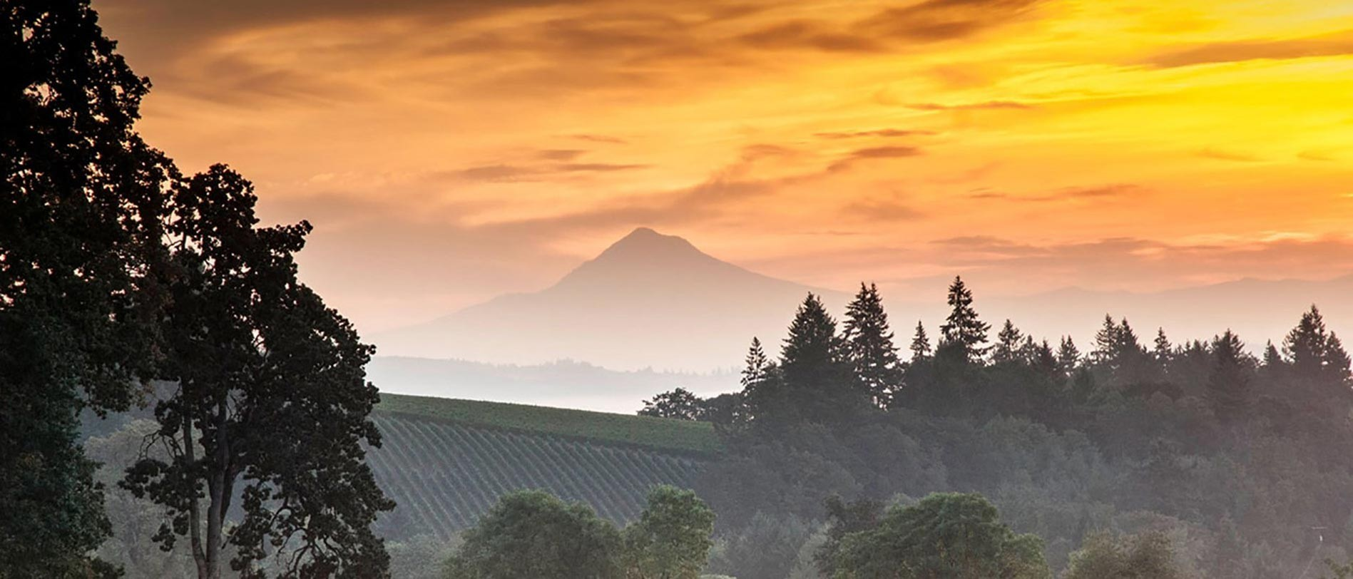A beautiful sunset over a vineyard with trees and a mountain in the distance