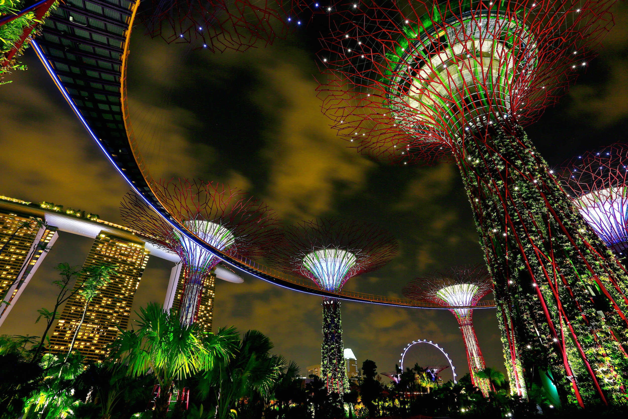 Night time view of supertrees taken from below showing Singapore city lights in the distance