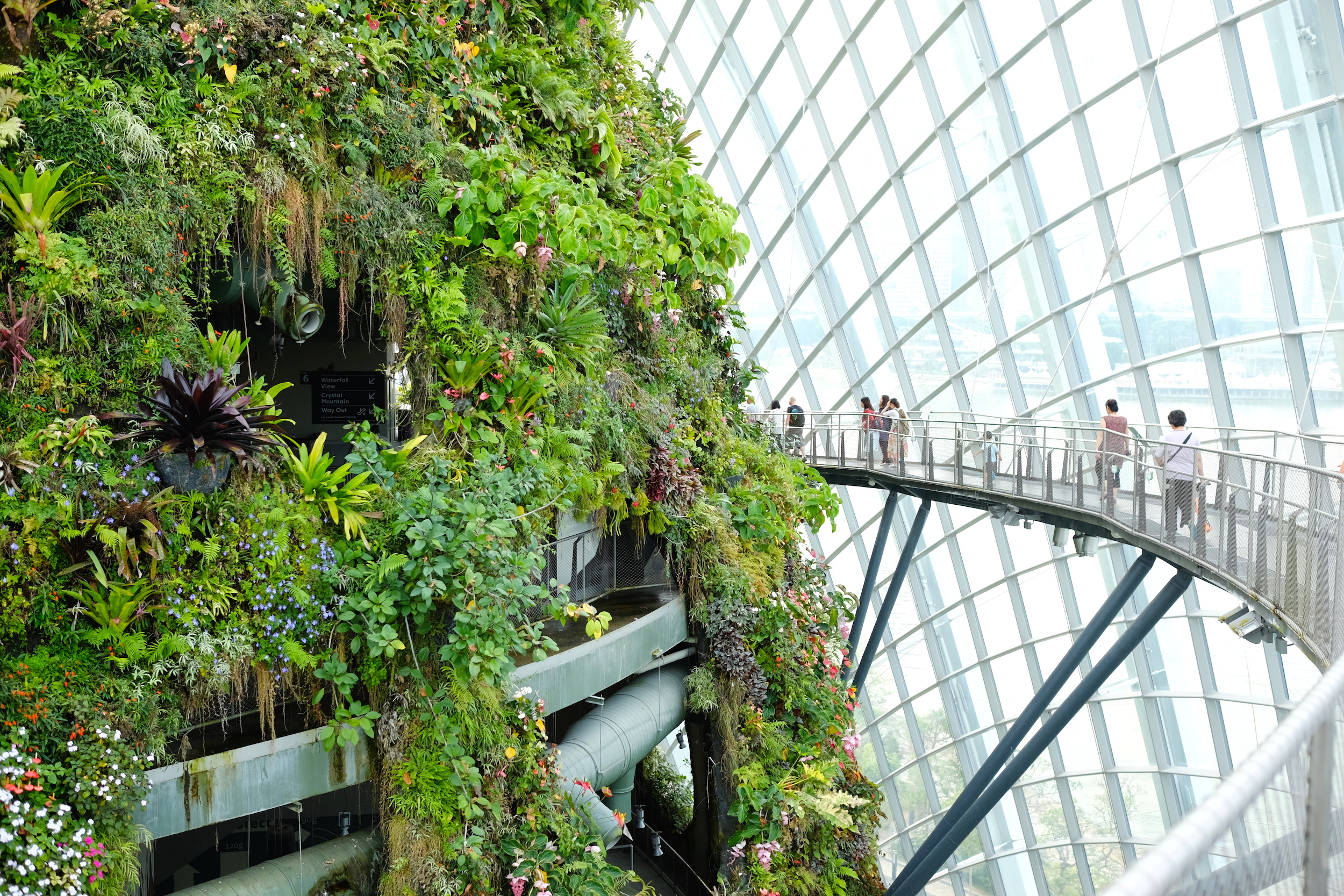 A tall, 35-metre garden is filled with tropical plants and a metal walkway skirts round the edge.