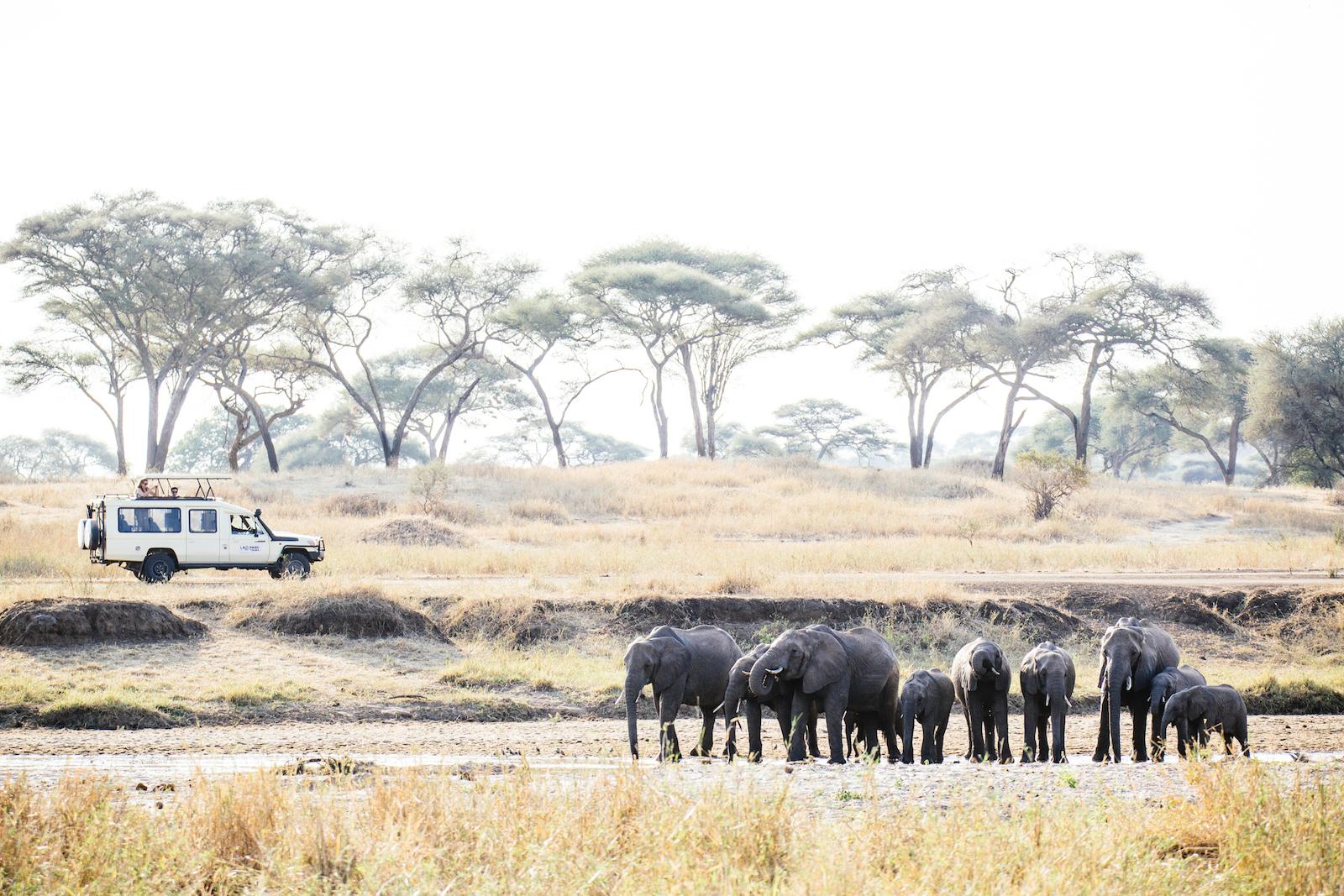 Herd of elephants grazing on the bank of the Kazinga River, Uganda.