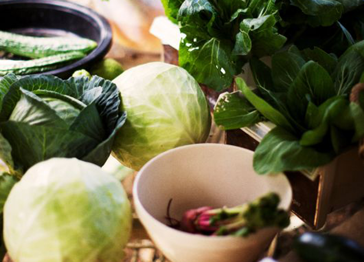 Cabbages on the table with other vegetables in bowls and herbs in a container