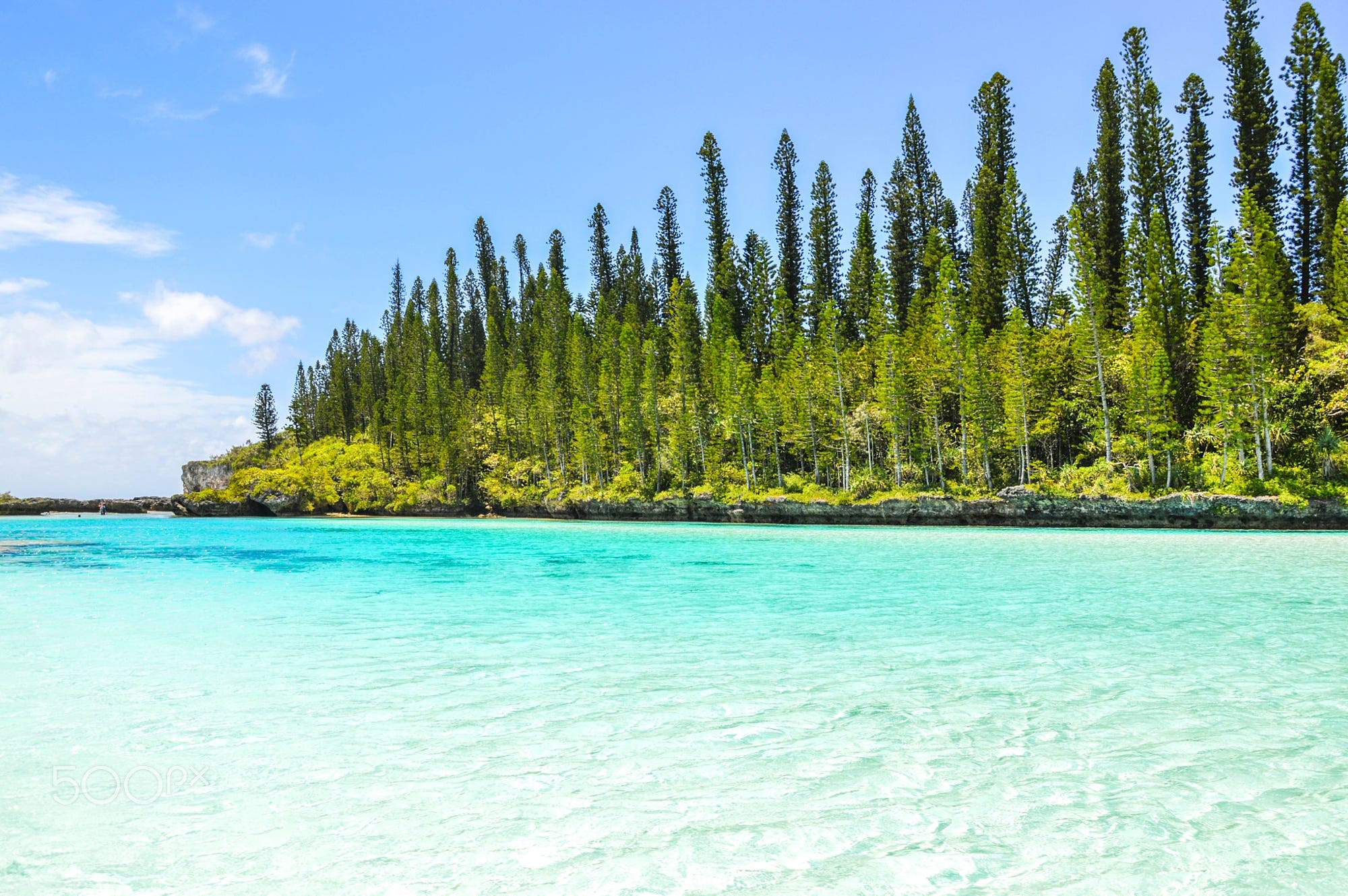 Glittering blue water lapping a pine forested hillock in New Caledonia