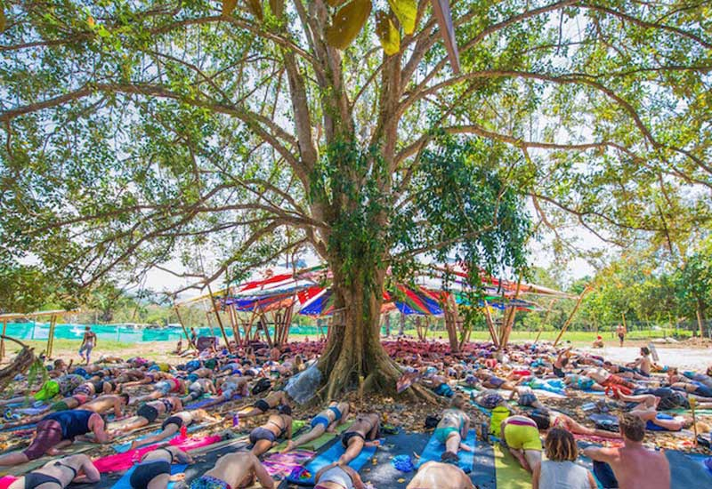 Large group prone on the ground performing yoga under a large spreading tree at Envision Festival
