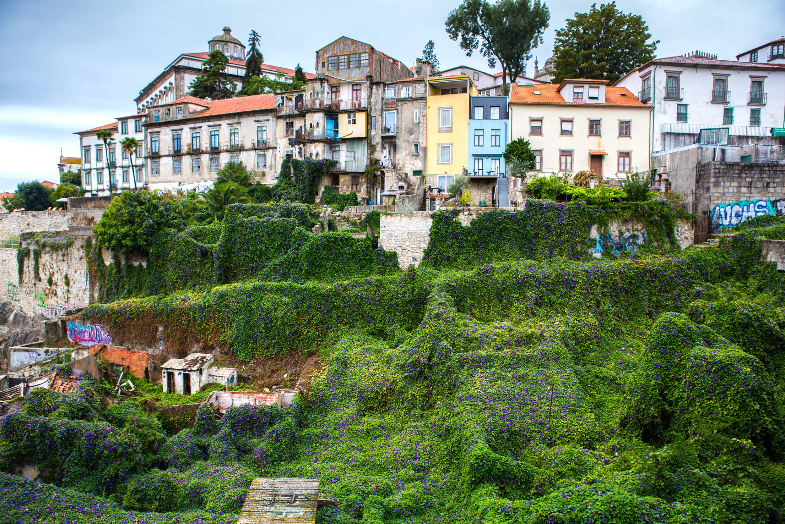 Green creepers covering the ruined parts of Porto with intact buildings above them