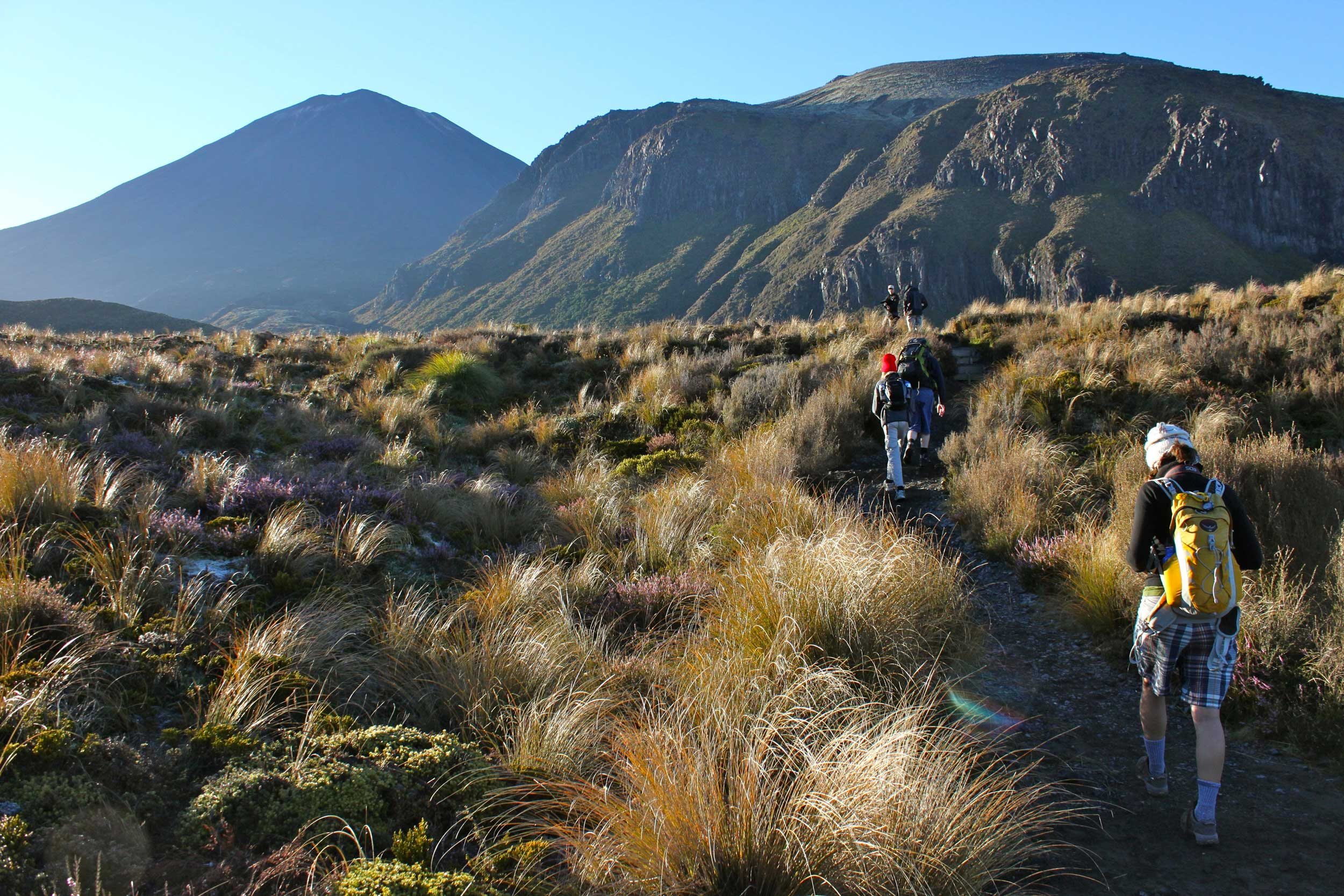 Some hikers with backpacks walking a track through tussock heading for mountains up ahead of them while doing the Tongariro crossing