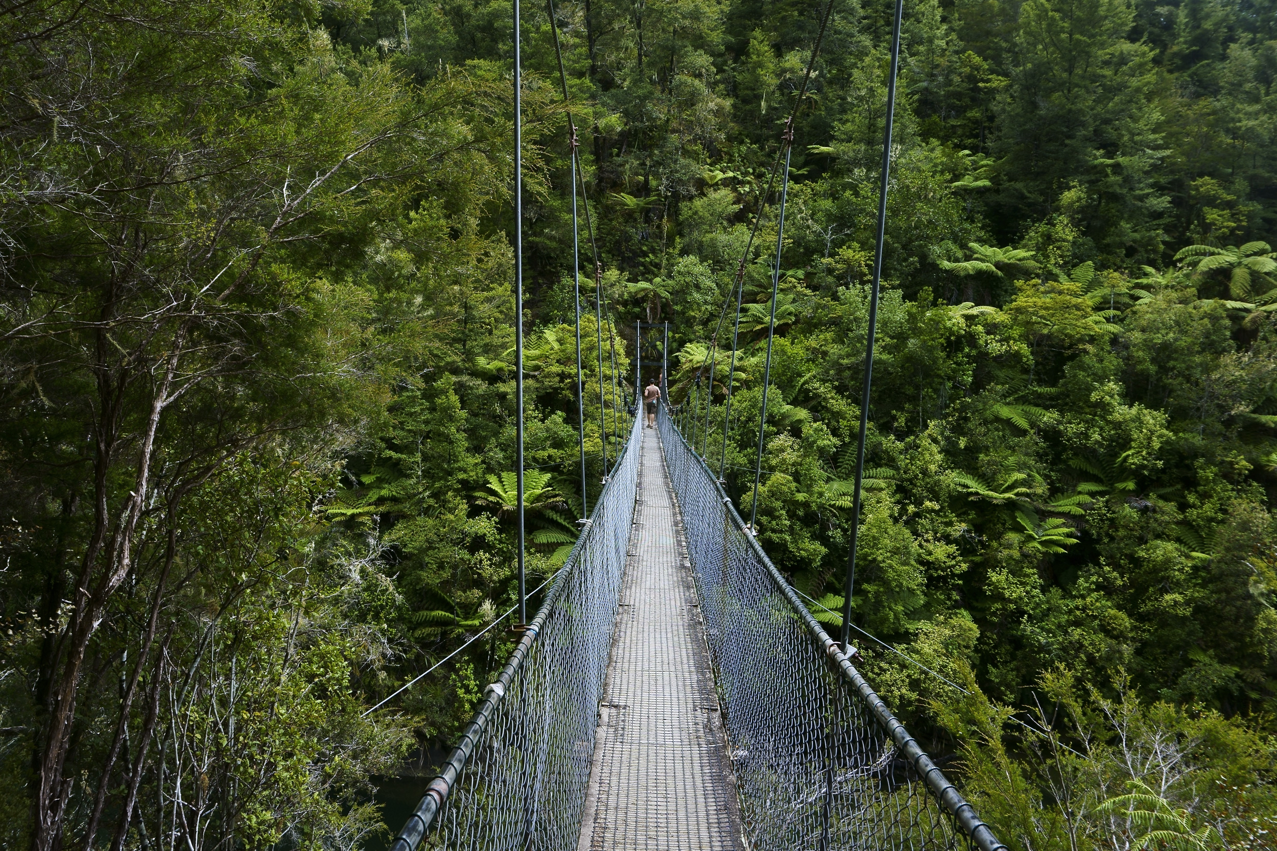 A wood and mesh swing bridge extending into the distance and traversing bush above a chasm at Abel Tasman National Park, New Zealand
