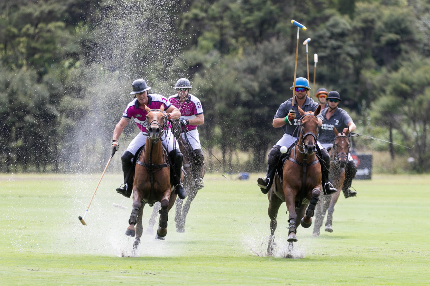 Reining Supreme: The New Zealand Polo Open