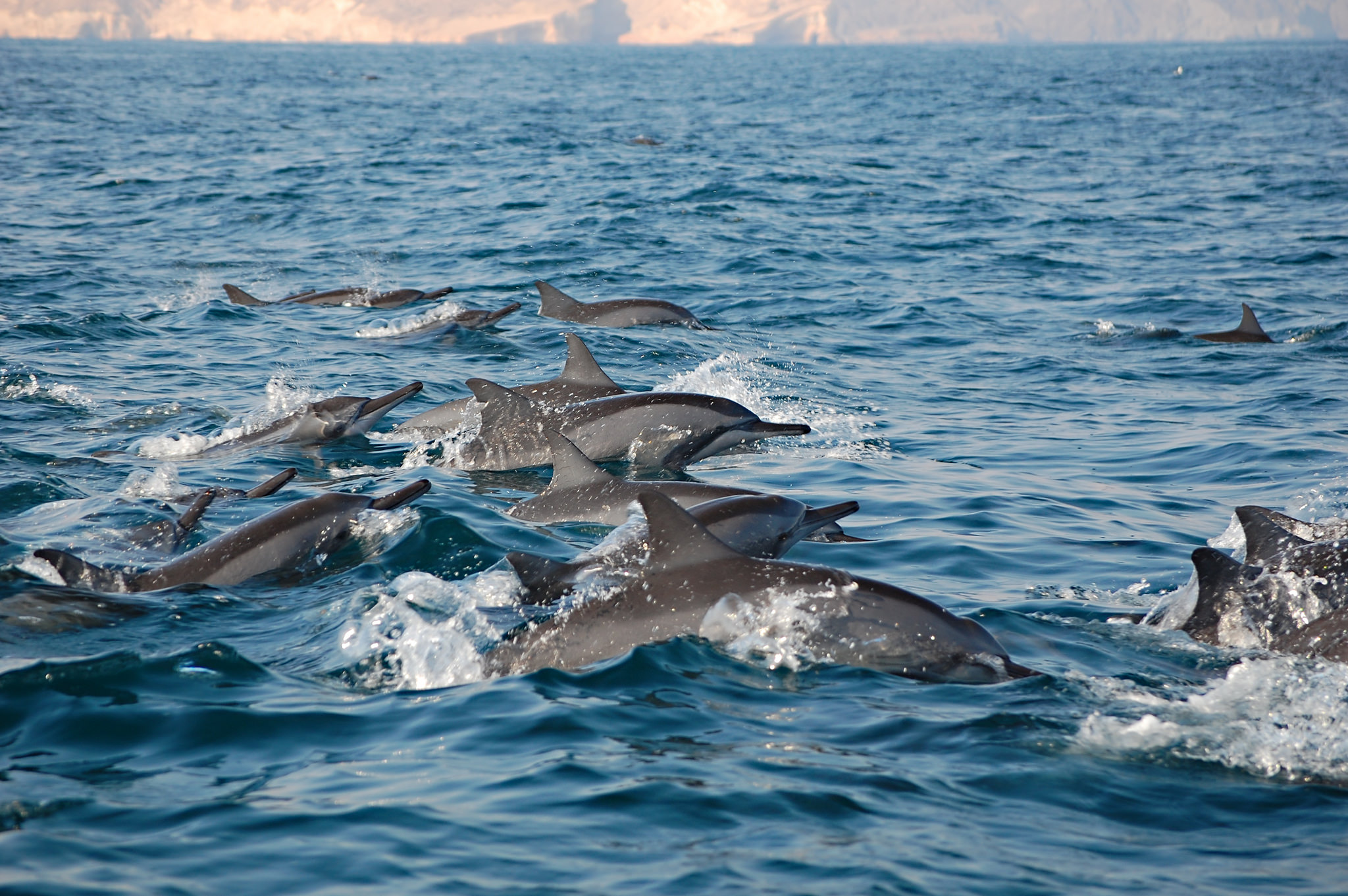 A pod of dolphins jumping in mid air