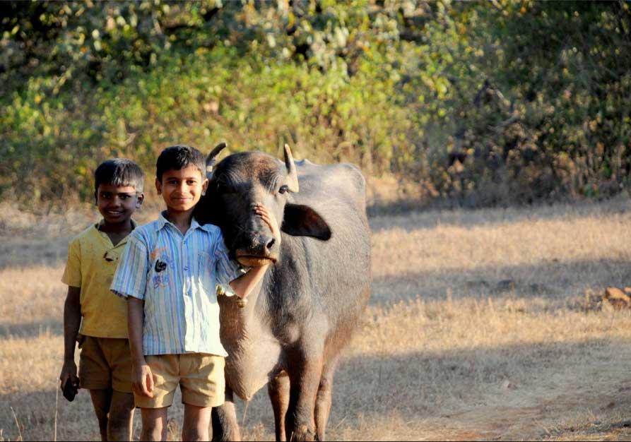 Purushwadi Village Experience