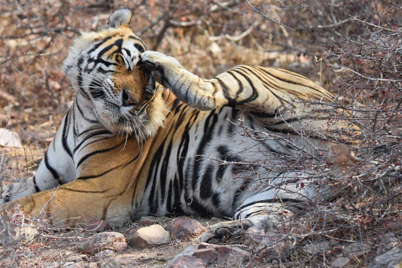 Photogenic Rajasthan and Tiger Safari