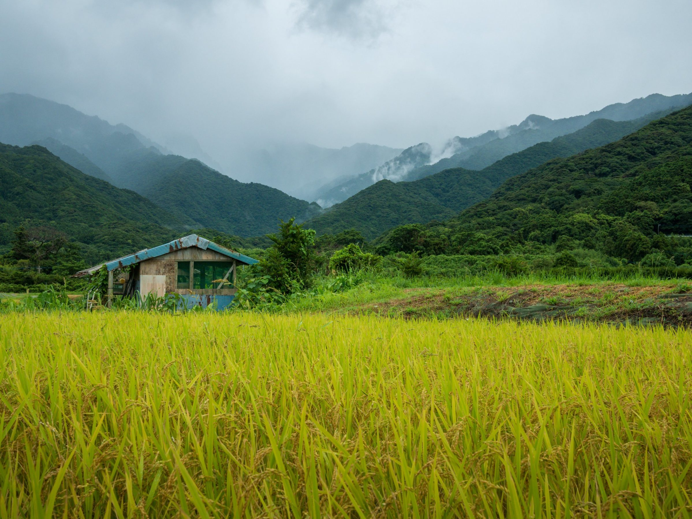 Abandoned building in a field of long grass with mountains in the background
