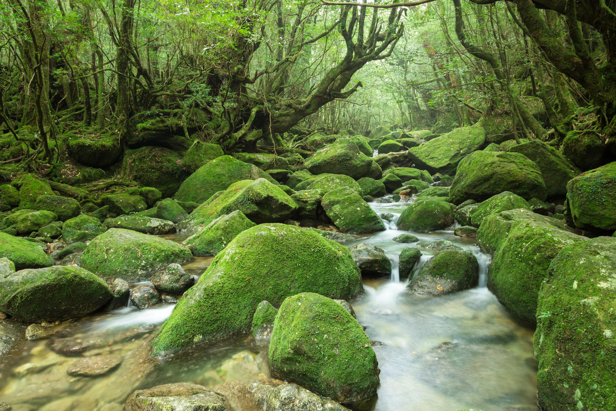 Moss-covered rocks and trees surrounding a stream