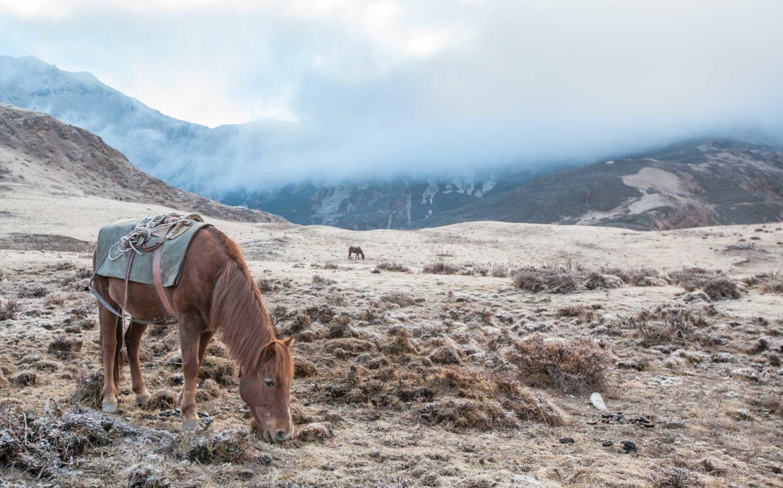 A Digital Detox Trip to the Kingdom of Bhutan