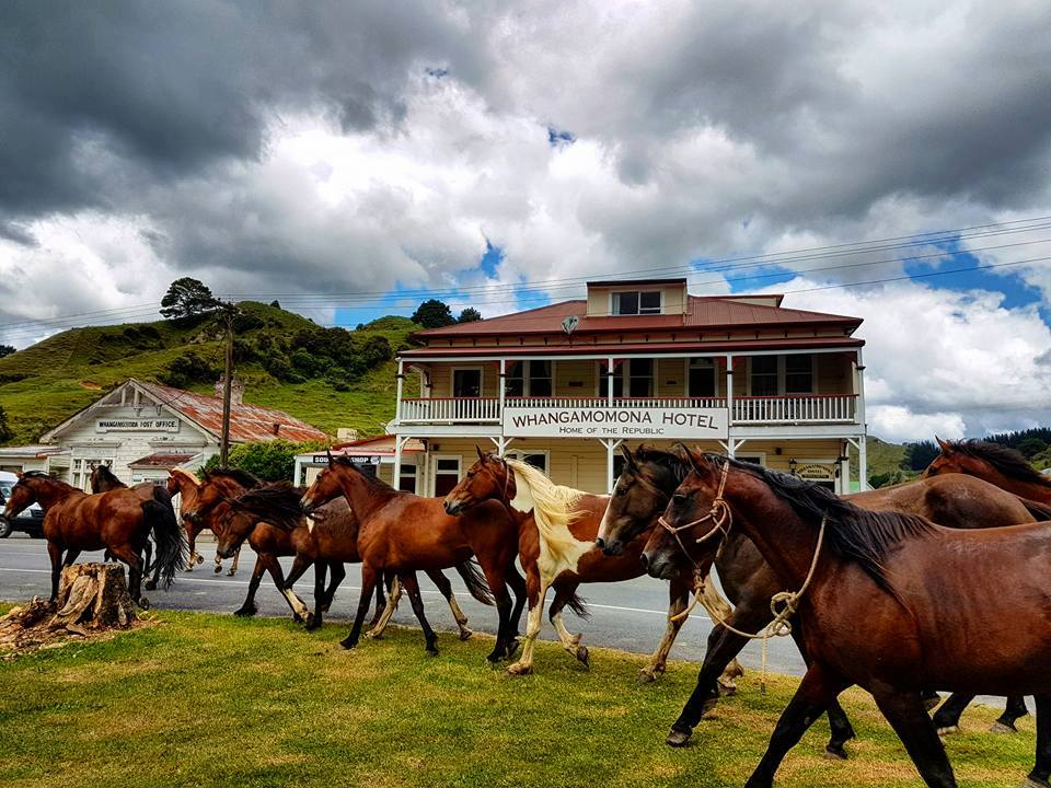 Line of horses in front of an old white villa-style hotel